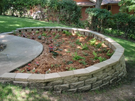 This Flower & Fern raingarden was installed using the Raingarden-in-a-Box program in Summer 2013.