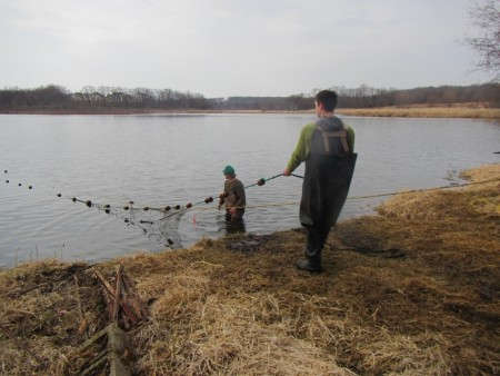 Arctic Lake carp seining March 2016 (2)
