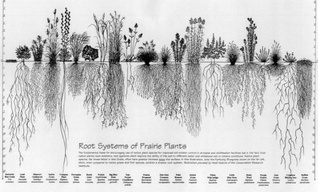 Roots of Native Prairie Plants via Conservation Research Institute and Heidi Natura