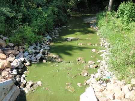 Blue-green algae blooms can vary in appearance, oftentimes resembling green paint or pea soup. This picture captured the presence of blue-green algae in the Spring Lake outlet to Prior Lake on August 13, 2012.