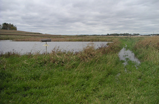 A buffer area around wetlands will reduce and filter runoff.