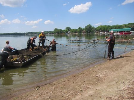 Figure 2. Using a seining net to catch carp; the carp were marked and then thrown back into the lake and will be used later to help estimate the carp population. Tony, our carp expert from WSB, is on the right.