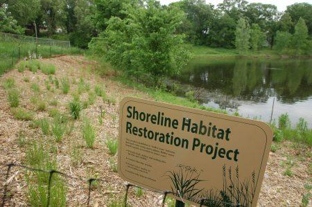 shoreline-restoration