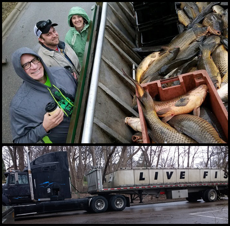 Carp are taken away on a semi truck that is equipped with large live-well tanks to keep the fish alive as they make their way to markets out east.