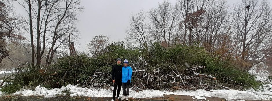 Devon and Gina Ross_Shore Crest Dr buckthorn pile_10-24-2020 (3)